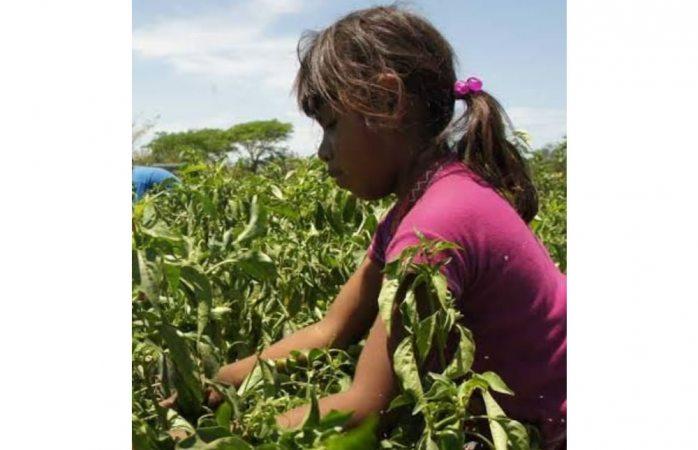 Chihuahua, con baja tasa en trabajo infantil: Inegi
