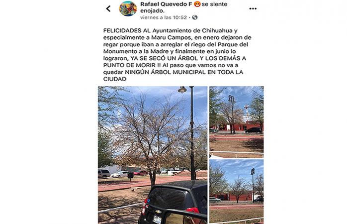 Se secan árboles por irresponsabilidad de municipio