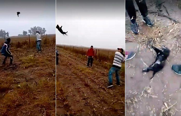 Indigna video de personas jugando béisbol con perro