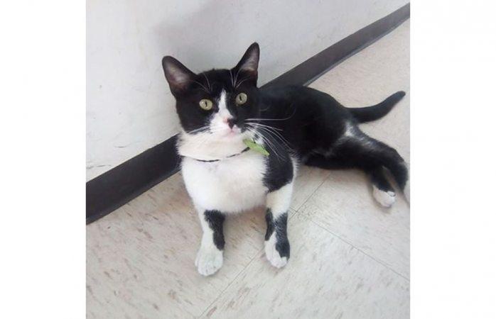 Piden ayuda para encontrar a gatito extraviado