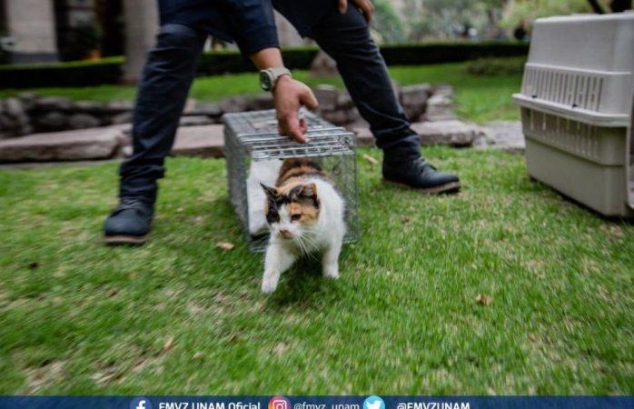 Regresan gatos a jardín de palacio nacional luego de ser vacunados