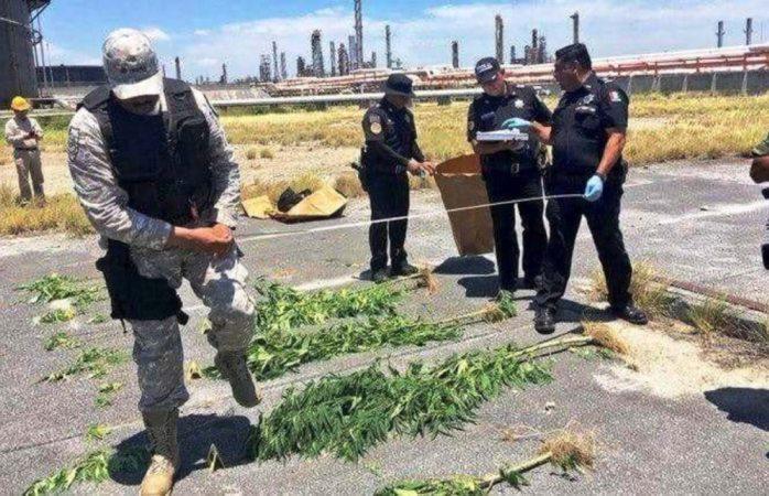 Hallan plantas de mariguana en refinería de Pemex en Monterrey