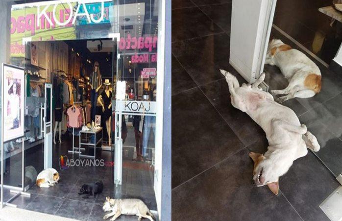 Tienda deja entrar a perritos a su local para protegerlos del sol en Colombia