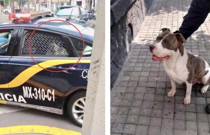 Policía secuestra a perrito y pide $2 mil 500 de rescate