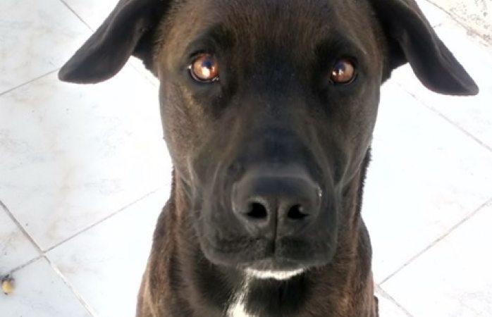 Buscan a mascotas extraviadas en villas del real