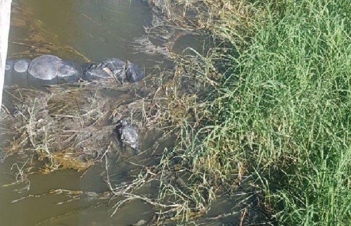 Hallan 19 embolsados en aguas negras en Jalisco