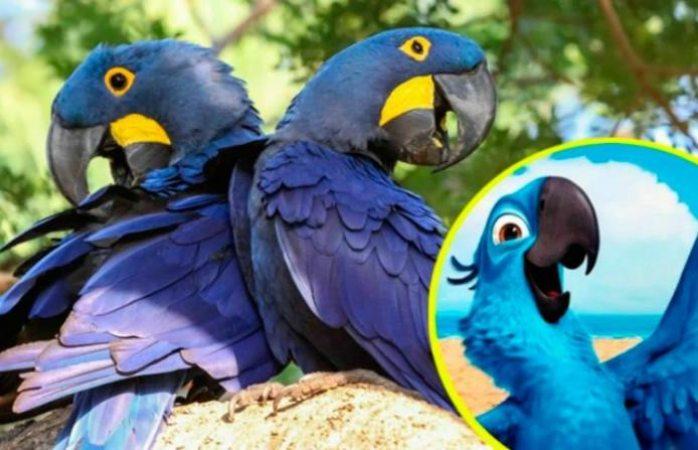 Nace guacamayo azul a pesar de extinguirse en el 2000