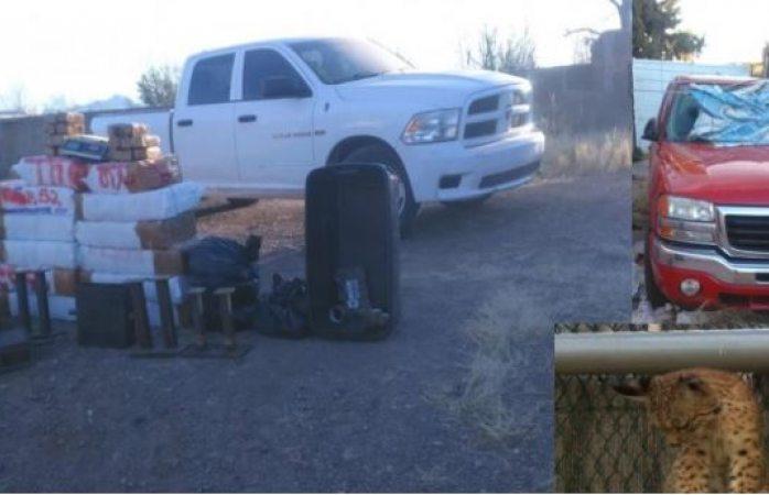 Aseguran un lince, drogas y camionetas en Buenaventura