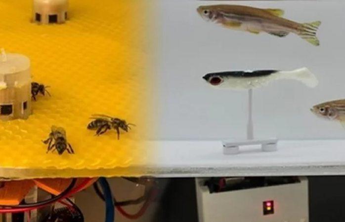 Logran comunicación entre abejas y peces mediante robots
