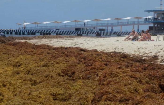 Alerta máxima ambiental en Quintana Roo por recale masivo de sargazo