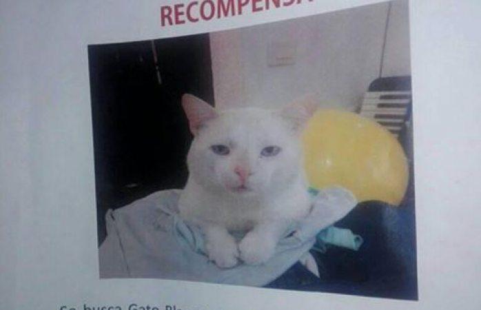 Ofrecen $10 mil a quien encuentre este gato