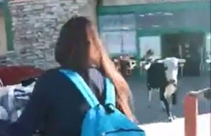 Vaca llega hasta las puertas de alsuper Cuauhtémoc