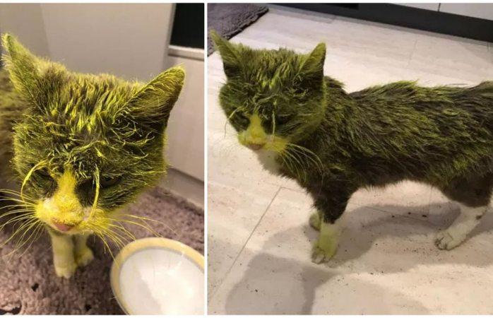 Muere gata tras ser rociada con pintura
