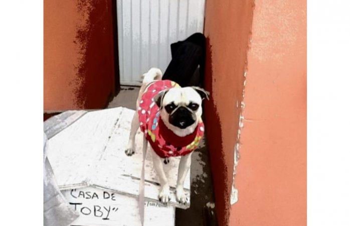 Piden ayuda para encontrar a perrito robado