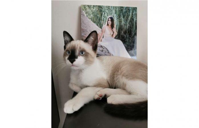 Piden ayuda para hallar a gatito extraviado