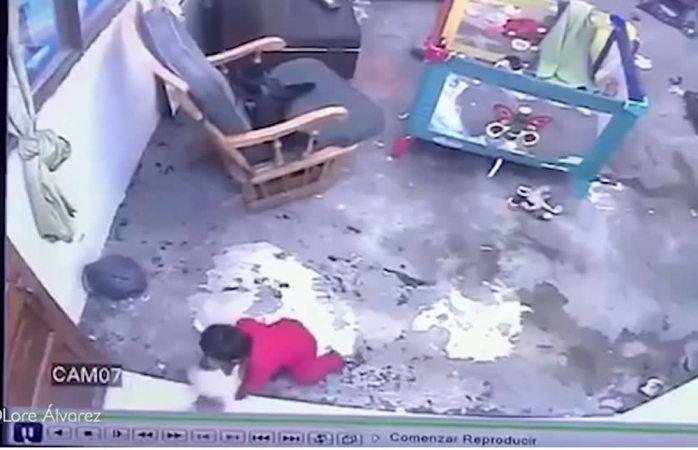 Gatita salva a bebé de una caída fatal por las escaleras
