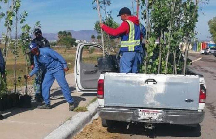 Sigue reforestación masiva en Delicias