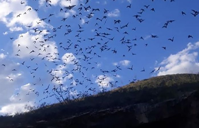 Reportan presencia de miles de murciélagos en santa eulalia