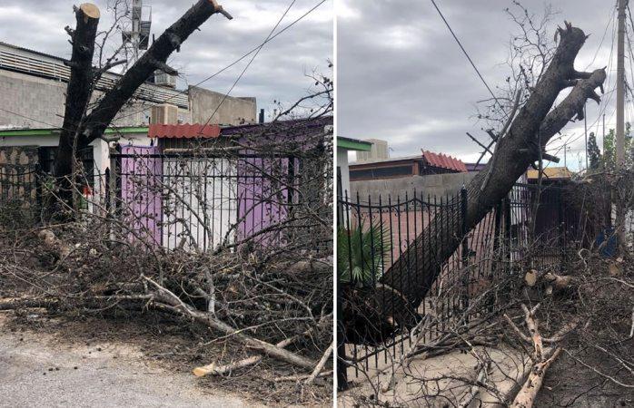 Se cae árbol y derriba cables de luz en las granjas