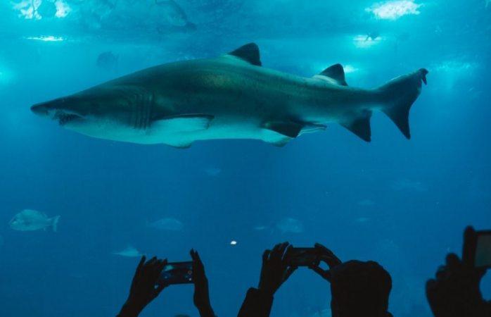 Un tiburón se come a otro frente a asistentes de un acuario (VIDEO)