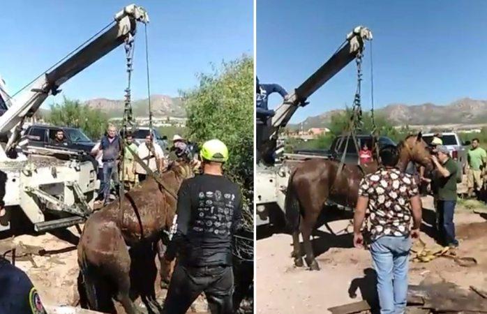 Ciudadanos rescatan a caballo que cayó en fosa séptica