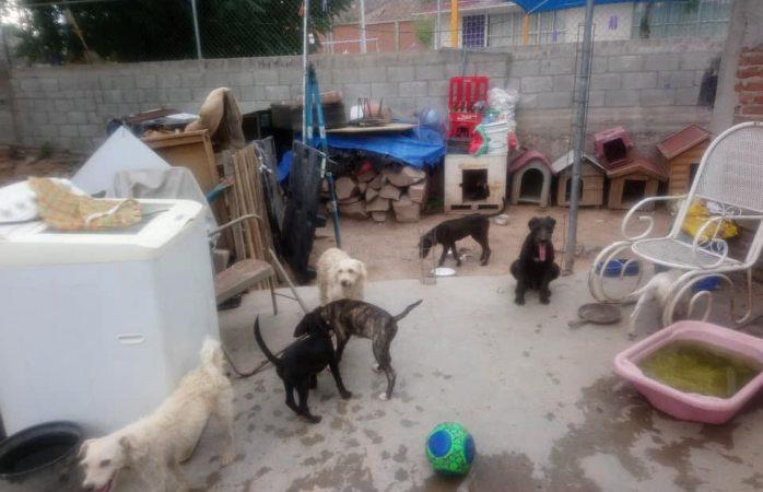 Solicitan ayuda para refugio de animales