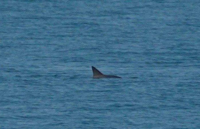 Reportan avistamiento de seis vaquitas marinas