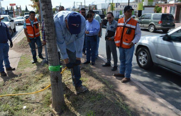 Inyectan tratamiento de crecimiento a árboles de la tecnológico