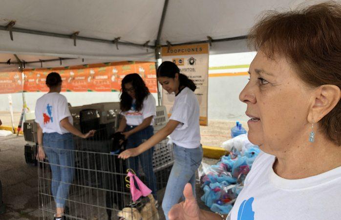 Rescatan a casi 10 mil  perros abandonados