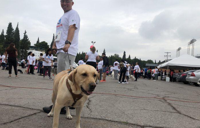 Participan 500 perros en carrera kmpeón por amor a los perros