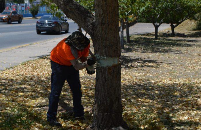 ¿Quién está dañando los árboles  en la cantera?
