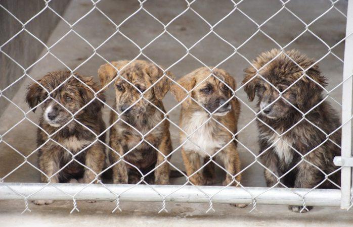 Concluye mañana campaña de esterilización de mascotas