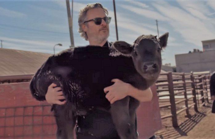Joaquin Phoenix rescata a vaca y su cría de matadero de Los Ángeles