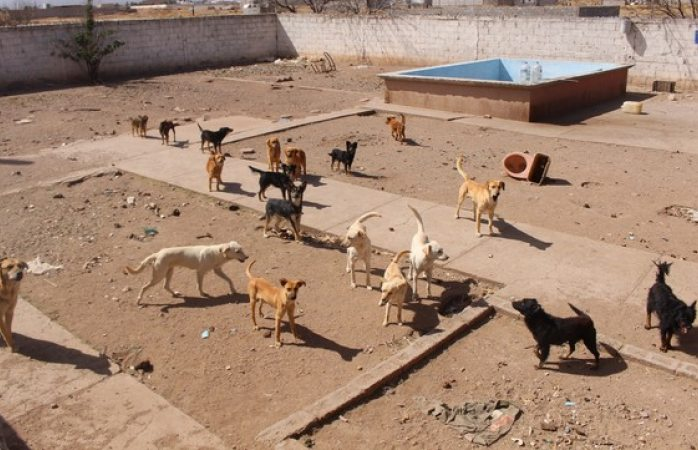 Buscan hogar para perritos rescatados en rastro clandestino
