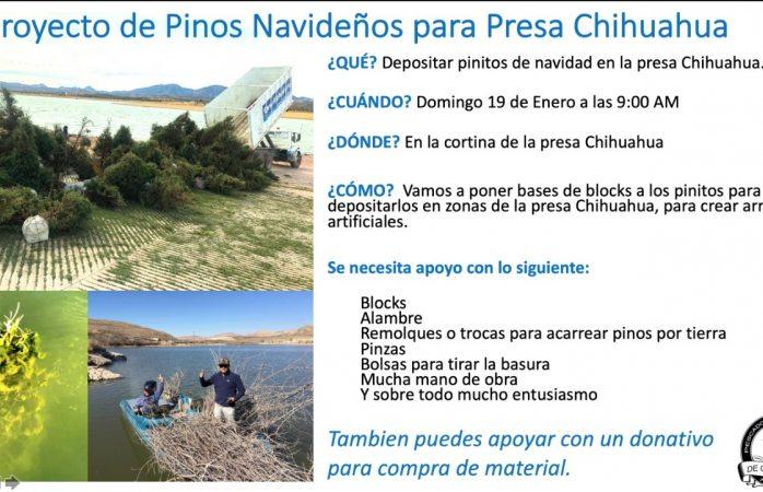 Sembrarán 300 pinitos navideños en la presa Chihuahua