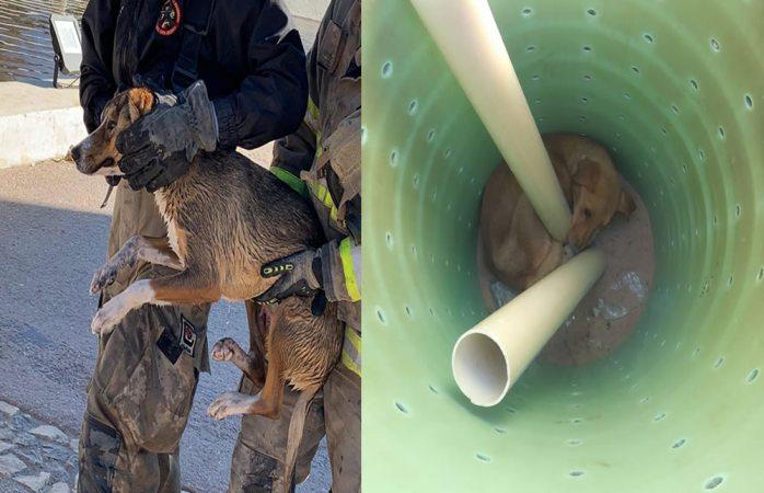 Bomberos rescatan dos perritos en Juárez