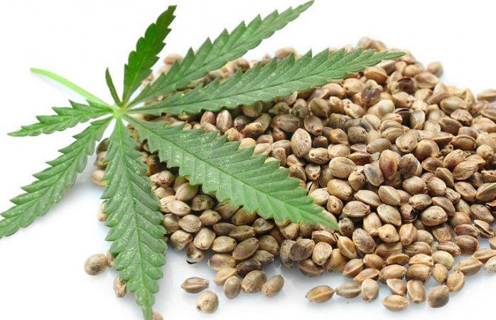 Con licencia se podrá traer hasta 200 gramos de marihuana