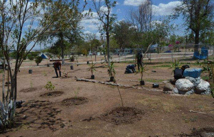 Reforestan el parque urueta: plantan 35 árboles