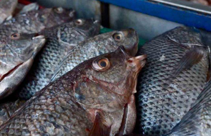 México evitó embargo pesquero de ee.uu: sader