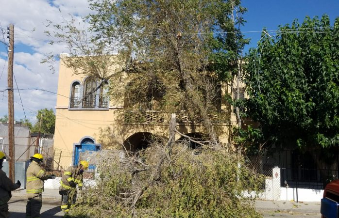 Se registran dos incendios, dos accidentes vehiculares y un árbol derribado