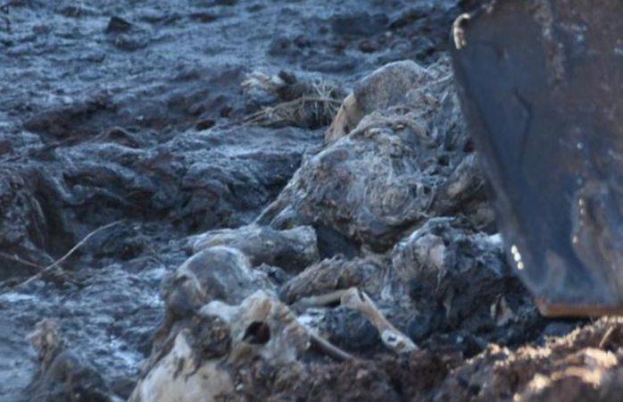 Reportan hallazgo de restos humanos en pozo de punta oriente