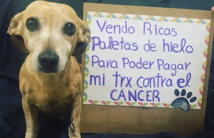 Perrita vende paletas para su tratamiento vs cáncer