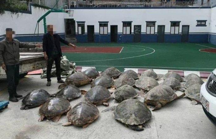Detienen a traficante con 107 tortugas congeladas en China