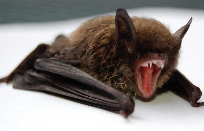 Científicos descubren cientos de nuevos coronavirus en murciélagos de China