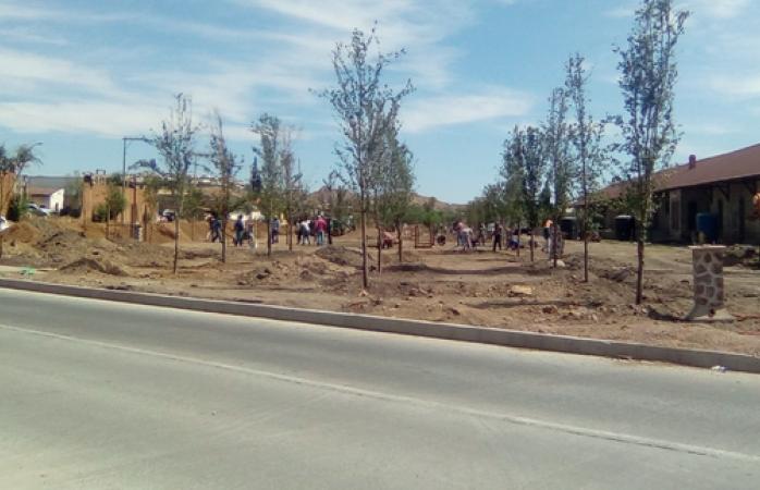 Plantan árboles en parque la estación