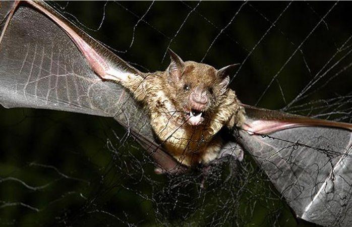 Queman murciélagos en Perú por pánico a coronavirus