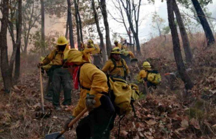 Reportan 46 incendios forestales en 15 estados del país