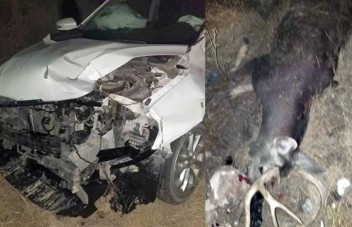 Destruye su auto al embestir venado en carretera