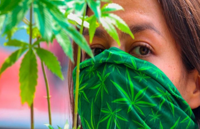 Regularización de marihuana dará entrada a drogas más fuertes: arquidiócesis