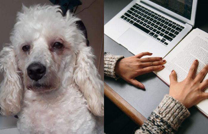Se viraliza perro desvelado por acompañar a dueña en tareas